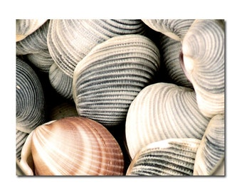 Clam Shells Still Life Photograph Large Print Seashell Ocean Sea Beach
