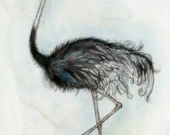 Feeling a little feathery - ORIGINAL Ostrich Painting