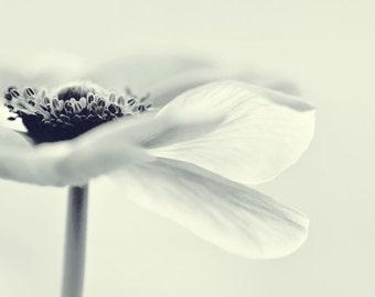 Anemone... Flower photograph. Pastel. Blue. Fine art photography print. 8x8 inches (20x20 cm)