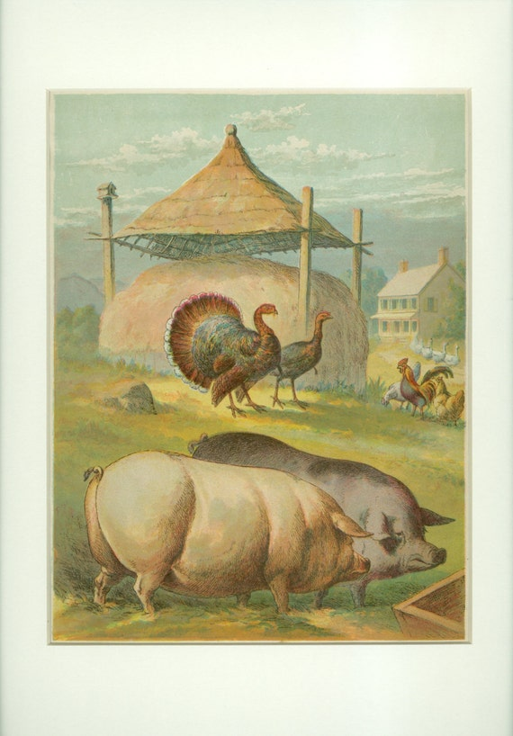 Domestic Farm Animals Antique 1903 Pigs Turkey And Chickens