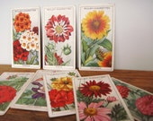 set of 8 1933 trading cards - garden flowers