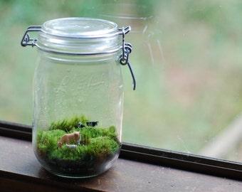 Tiny farm moss terrarium