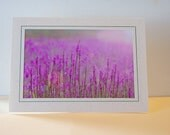 Purple Fields Greeting Card - 5 x 7 Photography Card - Blank Card - Flower Greeting Card - Floral Photography Print- Iowa Photography