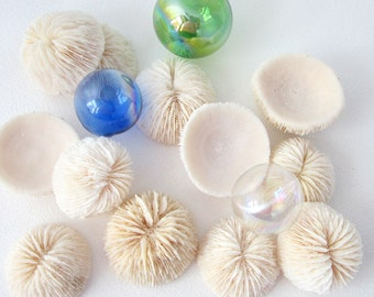 Beach Decor Mushroom Coral - Nautical Coral for Crafts or Seashell Displays, 3PC