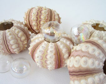 Beach Decor Urchin Seashells - Nautical Decor RARE Rose Sputnik Sea Urchins, 2pc, Rose