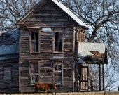 Old Farm House with Cow 5 x 7 Photograph - dawnephotography