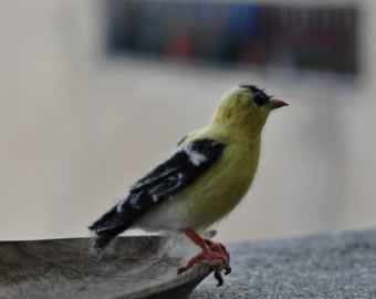 Needle Felted    Bird-American Goldfinch -Lifesize .Made to order