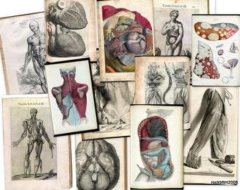 Hi Res Art DVD: Old 1500s Human BODY ANATOMY Organs Medicine Illustration Sketch Jpg