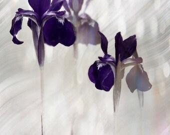 IRIS DREAM Abstract Color Original Art Photograph