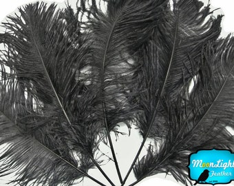 Ostrich Feathers, 1/2 lb - BLACK Ostrich Tail Feathers Wholesale : 3084-D