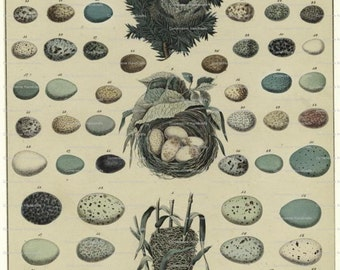 Collage Sheet Eggs and Nests 102  Instant Digital Download