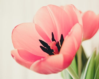 Lonely tulip flowers photography, pastel pink photography, nature, floral, spring, macro 8x12""
