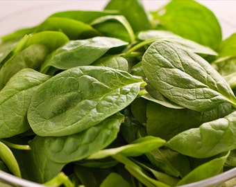 Organic SPINACH Seeds