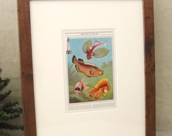 Framed Fish Print , Framed , Antique Book Plate , Ocean Life , Book Plate , Ocean Fish , Colorful Fish , Framed Plate , Sea Life, Art