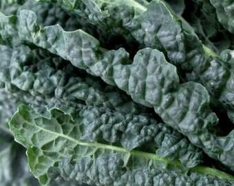Kale, Lacinato Kale Tuscany Kale Seeds - Heirloom Kale from 1885