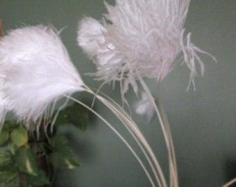 Seven OSTRICH Femina TIPS Plumes Feather  - White - 20/25 inch long
