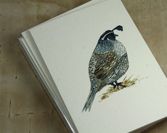 california quail thank you notes recycled cardstock set of 8 greeting cards in box