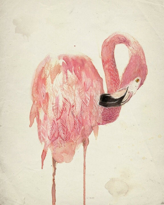 Flamingo Illustration ...