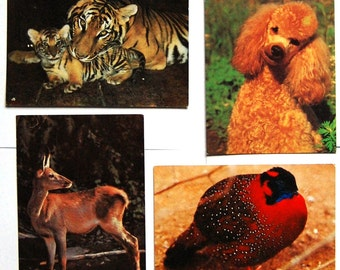4 Vintage Soviet Postcards - Birds Animals Photo Cards - Poodle Deer Bengal Tiger Tragopan Pheasant - Card Unused - 1980s - Russia / USSR