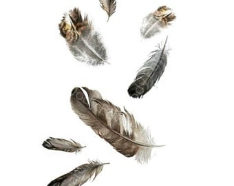 Floating Feathers - Archival Print of Found Feathers Watercolour painting of feathers