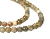 Fossil Coral Beads, 6mm round natural gemstone, Full and Half strands available (716S)