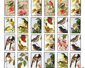 1 x 1.5 inch tiles vintage birds images Printable Download Digital Collage Sheet diy altered art jewelry pendant tag