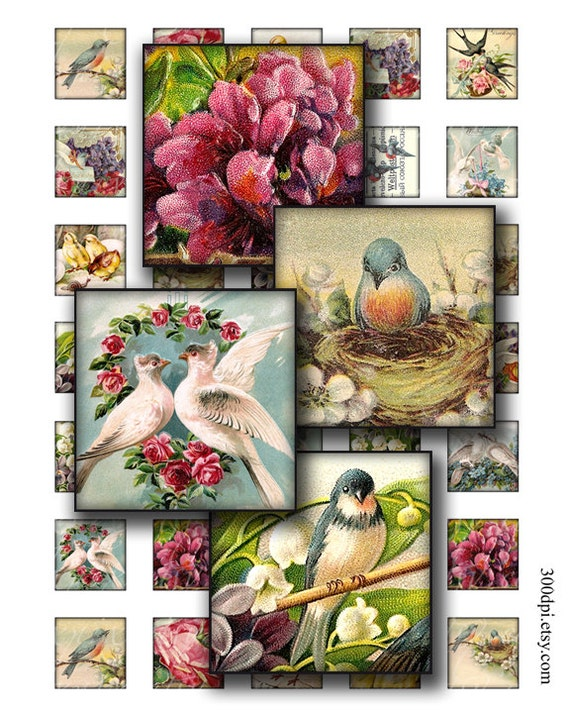 birds 1 x 1 inch square images Printable Download Digital Collage Sheet diy jewelry pendant sticker magnet scrapbooking inchies