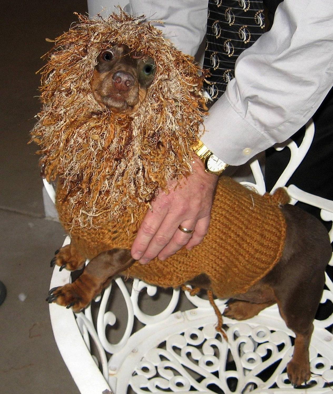 PDF Download Knit Pattern for Lion Dog Sweater - Sizes XS ...