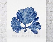Seaweed II in Denim Blue Watercolor Print 8x10 - Sea Coral Art Print - Sea Fan Art Print - Coral art by Kerri Shipp