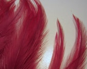 Claret Feathers 2 to 5 inches Loose Craft feathers qty 30