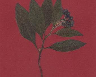 Pressed Flower Art Print Purple Flower with Dark Green Leaves