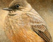PRINT, Says Phoebe, birds, 5 X 7, Giclee prints, bird decor, bird decor, birds, Ellen Strope, home decor, art prints, song birds, bird art