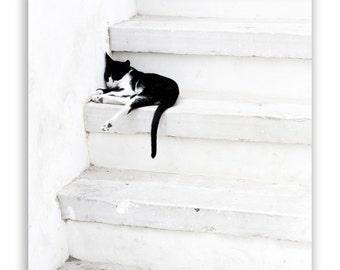 Black on White 2 - black and white decor, white stairs, black and white kitten, Greece photography, minimalist art - Fine Art Photograph