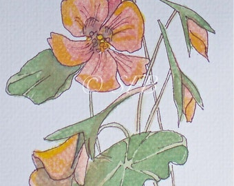 Orange Nasturtiums Art Print of Original Watercolor Painting