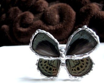 Real Butterfly Wing  Bracelet - Asterope Optima depuiseti