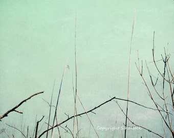 Swamp Reeds Photograph Nature Abstract Pale Mint Green Wall Art Landscape Minimal Nature 10x8