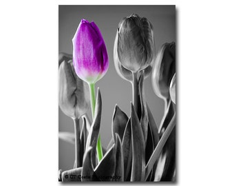 Purple Tulip Still Life Photography Print, Radiant Orchid, Mothers Day Gift idea, flower wall art, Spring decor