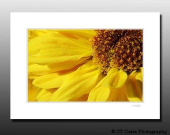 Yellow Daisy Matted Wall Art, Macro flower photo, floral print, Ready for framing