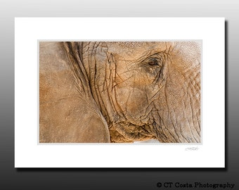 Elephant Print, Photo of Elephant, Small Signed Matted Print, Animal art, Ready for framing, Cubicle decor, brown