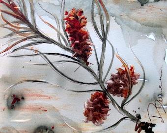Botanical Art Print of Pinecones