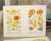 Vintage 1929 National Geographic Double Page Botanical - Paper Ephemera