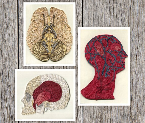 3 Anatomic Quilling Posters depicting the systems of the human head, Doctor Decor Print, Color anatomic illustration, Paper art print