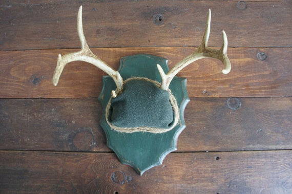 Vintage Deer Antler Mount with Green Military Wool Unique Taxidermy Woodland Wall Art