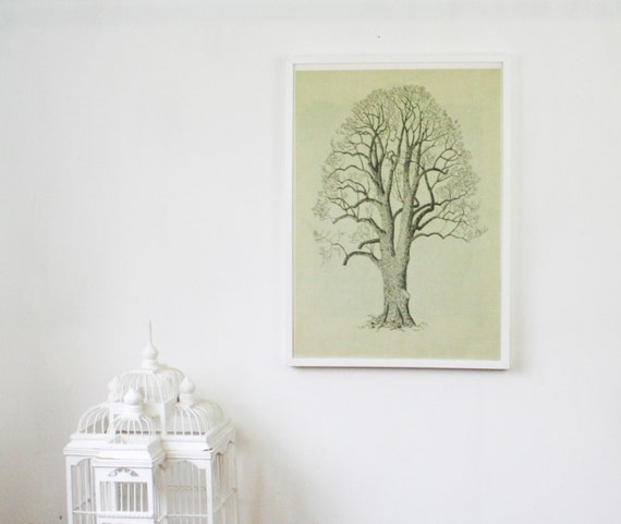 Vintage Dutch Botanical Print, Double Sided Linden Tree