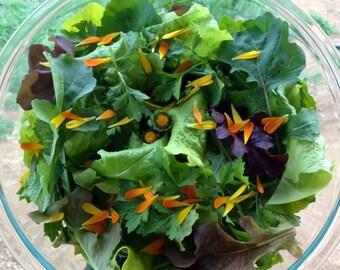 Mendocino Mesclun Greens Mix Exclusive Custom Kenyon Organics Superfood Salad Mix Seeds