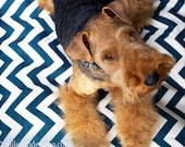 Ready to Ship Dog Bed Chevron/Zig Zag Pet Duvet Cover-Medium