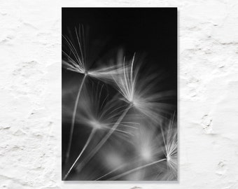 black and white dandelion photograph fine art photo macro wall decor nature dark