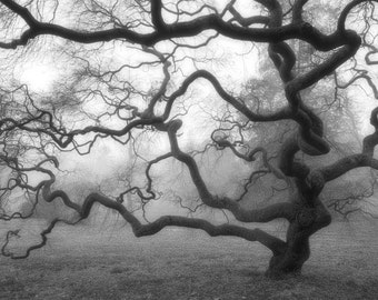 Nature Photography, Winter Tree, Black and White Photograph, Japanese Maple Tree, Fog, Mist, Landscape, Zen, Home Decor, 8X12, Tree of Life