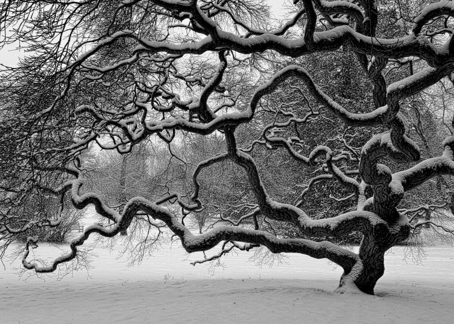 Black And White Landscape Photography 34 Background ... |Nature Photography Black And White