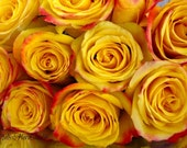 Yellow Orange Pink & Red Rose Bouquet Note Cards -  Birthdays, Bridal, Love, Get Well, Blank - Set of 4